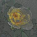 Yellow Rose by Lovina Wright