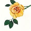 Yellow Rose by Margaryta Yermolayeva