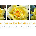 Yellow Rose On The First Day Of Summer by Michelle Calkins