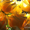 Yellow Roses And Light by Carol Groenen