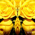Yellow Roses Mirrored Effect by Rose Santuci-Sofranko