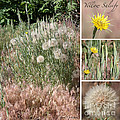 Yellow Salsify Collage by Carol Groenen
