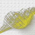 Yellow Seashell by Carol Lynch