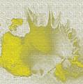 Yellow Shell by Carol Lynch