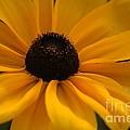 Yellow Silk by Kathleen Struckle