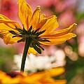 Yellow Star by Al Fritz