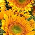 Yellow Sun Flower Burst by Susan Garren