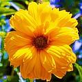 Yellow Sunflower by Eric  Schiabor
