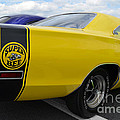 Yellow Superbee  by Mark Spearman