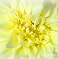 Yellow by Tami Martin