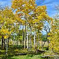 Yellow Tree by Keith Ducker