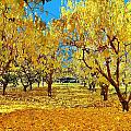 Yellow Trees by Marilyn MacCrakin