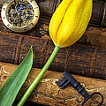 Yellow Tulip On Old Books by Garry Gay