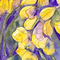 Yellow Tulips 3 by Ingela Christina Rahm