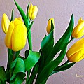 Yellow Tulips by Barbara Zahno