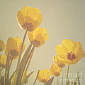 Yellow Tulips by Diana Kraleva