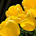 Yellow Tulips by Diane Lent