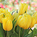 Yellow Tulips In The Spring Garden by Jennie Marie Schell