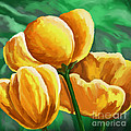 Yellow Tulips On Green by Tim Gilliland
