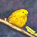 Yellow Warbler II by Sharon Farber
