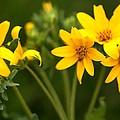 Yellow Wildflowers by Terry Fleckney