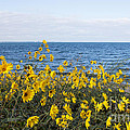 Yellow Wind by Barbara McMahon