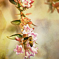 Yellowjackets Love Pink by Trish Tritz
