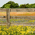Yellows Plus by Bob Phillips