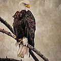 Yellowstone Bald Eagle by Priscilla Burgers