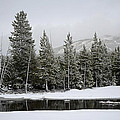 Yellowstone Gibbon Meadows Spring Snow And Reflection by Bruce Gourley