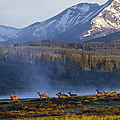 Yellowstone Morning by Bruce Colin
