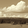Yellowstone National Park Scenic View Sepia