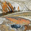 Yellowstone Small Crested Pool by Debra Thompson