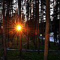 Yellowstone - Sunset Through The Trees by George Bostian
