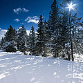 Yellowstone Sunshine by David Lichtneker