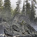 Yellowstone - The Rock Tree by Image Takers Photography LLC
