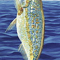 Yellowtail On The Menu by Danielle  Perry