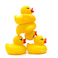 Yelow Ducks by Bernard Jaubert