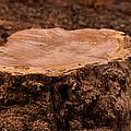 Yesterday A Tree #1 by John Carroll