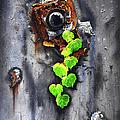 Yesterday - Now by Jurek Zamoyski