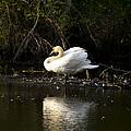 Yogi Swan by Jatinkumar Thakkar