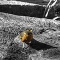 Young Bird Exploring by John Straton