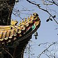 Yonghegong Temple 9108 by Terri Winkler