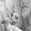 Yorkie Dog On A Cliff Pencil Portrait by Mike Theuer