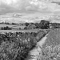Yorkshire Dales Uk by Julia Gavin