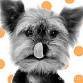 Yorkshire Terrier Dog by Jean-Michel Labat