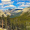 Yosemite  by Cheryl Cutler