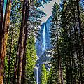 Yosemite Falls by Dany Lison