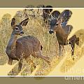 Yosemite National Park - Deer by Scott Cameron