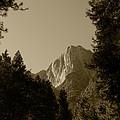 Yosemite Park Sepia by Mini Arora